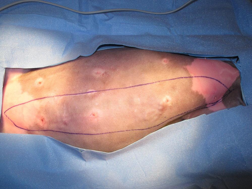 Mammary Carcinoma