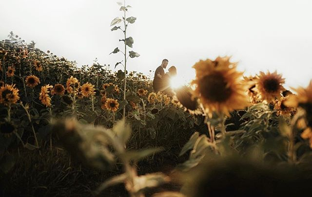 Throwback to the sunflower bloom with these two that won my giveaway last year🌻! Been super busy lately but thinking of doing another giveaway maybe for 20K! Every giveaway I've done has given me the gift of meeting the most amazing people and so excited for another one soon! 🙌🏽 . . . . . . #engagedlife #adventurousstorytellers #weddingphotoinspiration  #annigrahampresets #soloverly #orangecountyweddingphotographer #houstonweddingphotographer #lookslikefilmweddings  #weddingphotographer #travelandweddingmagazine #risingtidesociety #wedventuremag #wanderingweddings #weddingwire #theknotweddings #loveandwildhearts #belovedstories #youngandwildstories  #weddingdayready #sandiegoweddingphotographer #unconventionaltogs #justalittleloveinspo #authenticlovemag #wedstagram  #elopementlove #photobugcommunity #dirtybootsandmessyhair #destinationweddingphotographers