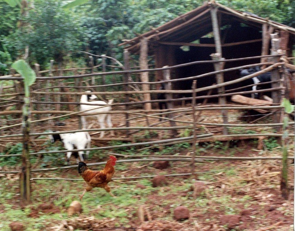 our_farm3.jpg