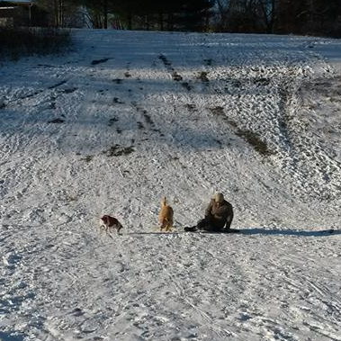 Playing With My Dogs