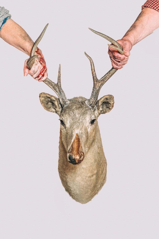 deer--3.jpg