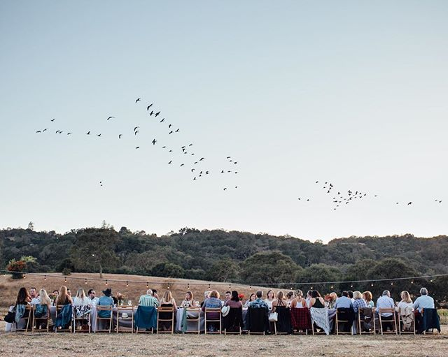 That time a flock of geese flew overhead our farm dinner as if to herald in the autumn! Took our breath away! 🌾🍂🍁😍