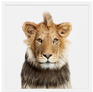 randal ford lion print