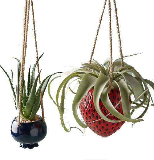 hanging fruit pot