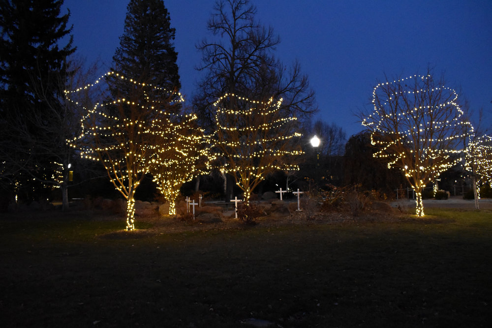 Tree Lighting 5.jpg