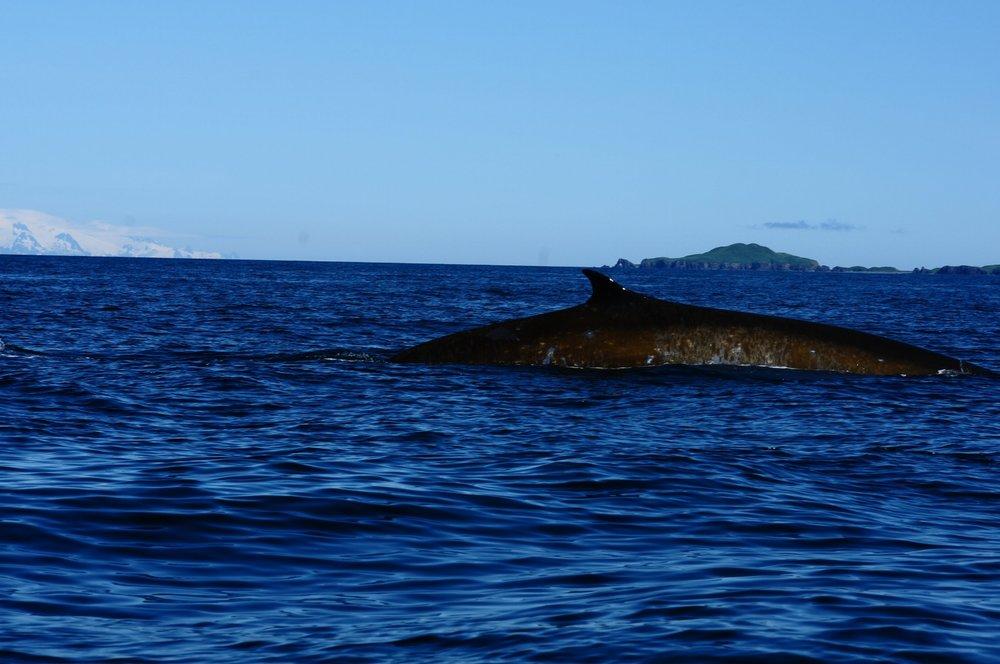 Whale pic.JPG