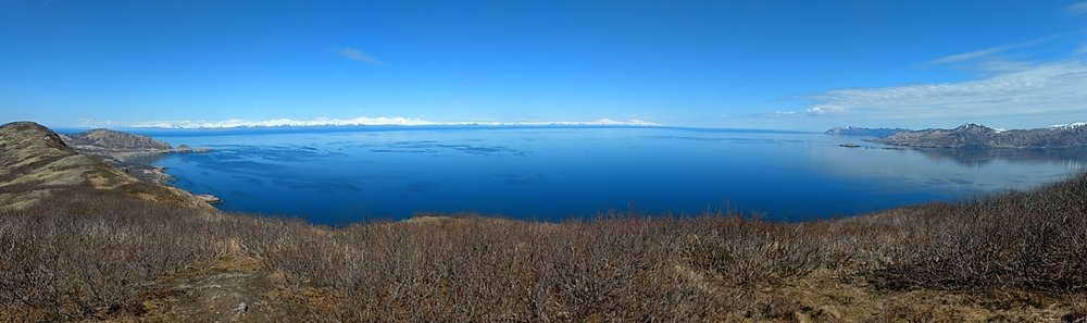 This is where our salmon comes from. What a glorious place to be swimming free. On the far horizon are the snow covered peaks of the Alaska mainland across the volatile Shelikof Straits. We hiked up this mountain last week as a spring tonic for mind and soul.