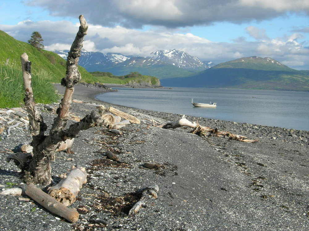 Driftwood  on the beach with Uganik Alps in background