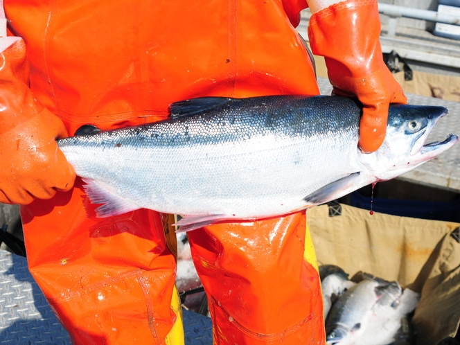 tol+w+salmon.jpg