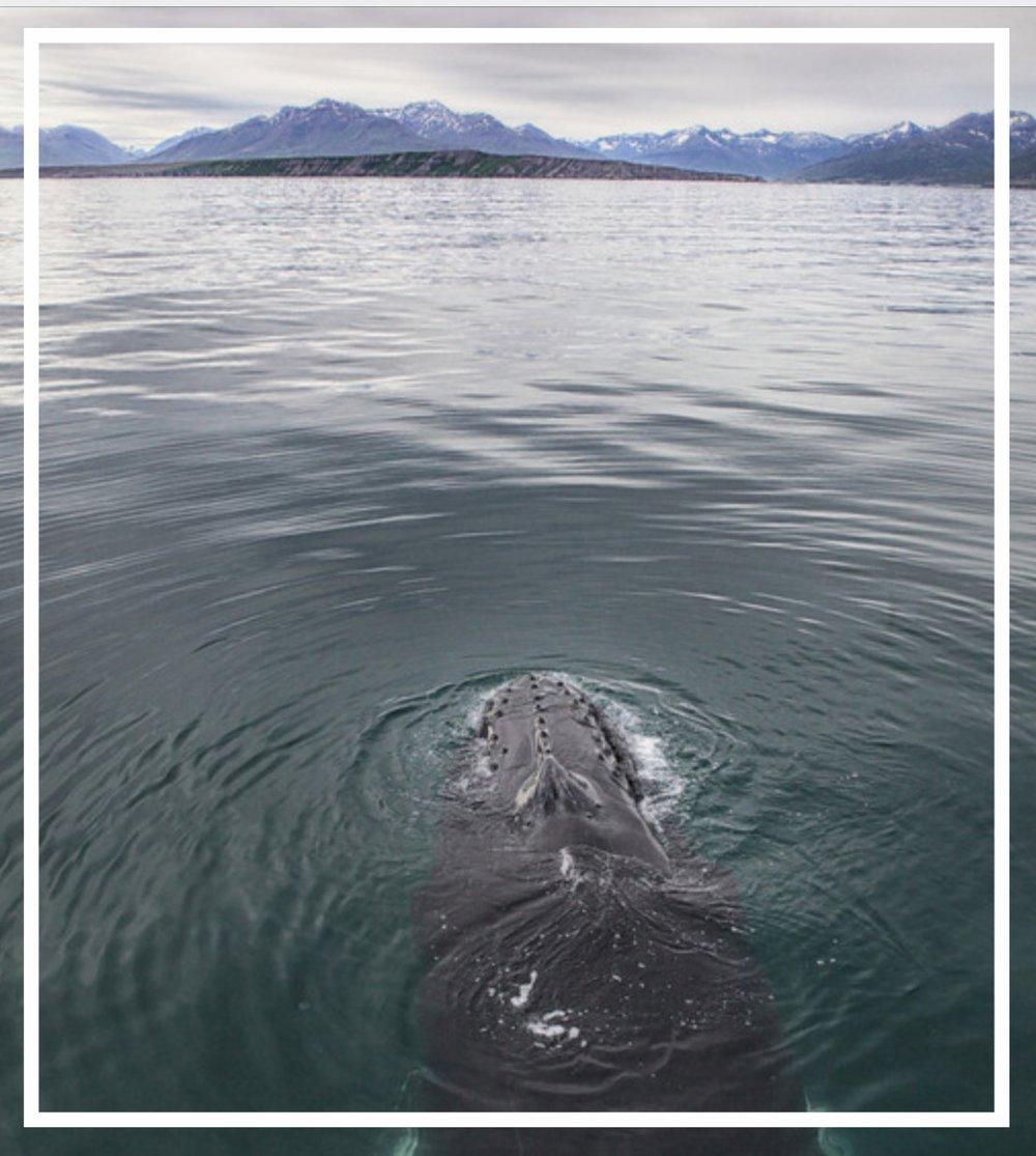 Vancouver Island Marine Wildlife