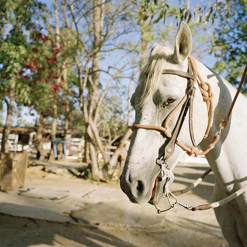 Copy of La Casona quarter horse, 2014