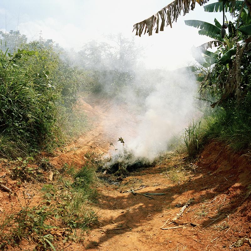 Copy of A través del humo veo campos de verde, 2014
