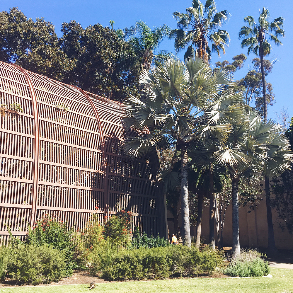Balboa Park Palm Trees—A Place to Just Be // Curiosities Allowed // Creative blog of Lizelly Meza