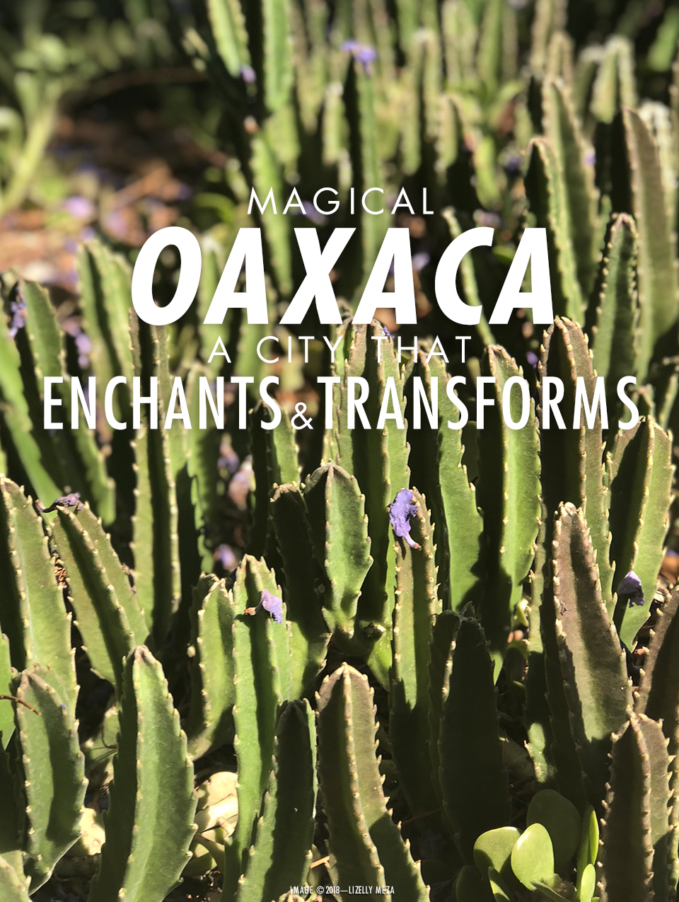 The Magical Oaxaca—A City That Enchants & Transforms You—// Curiosities Allowed // Creative blog of Lizelly Meza