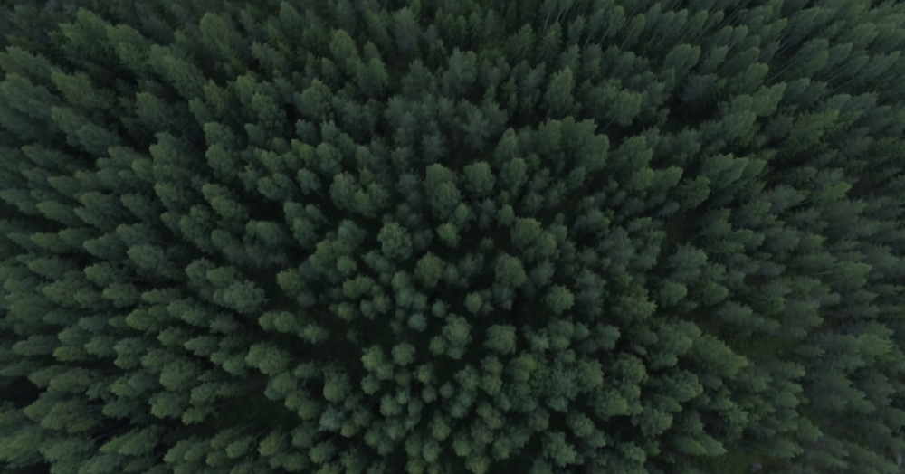 drone-trees-finland-forest.jpg