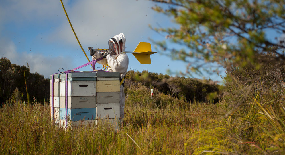 Unhooking on hives on their summer home