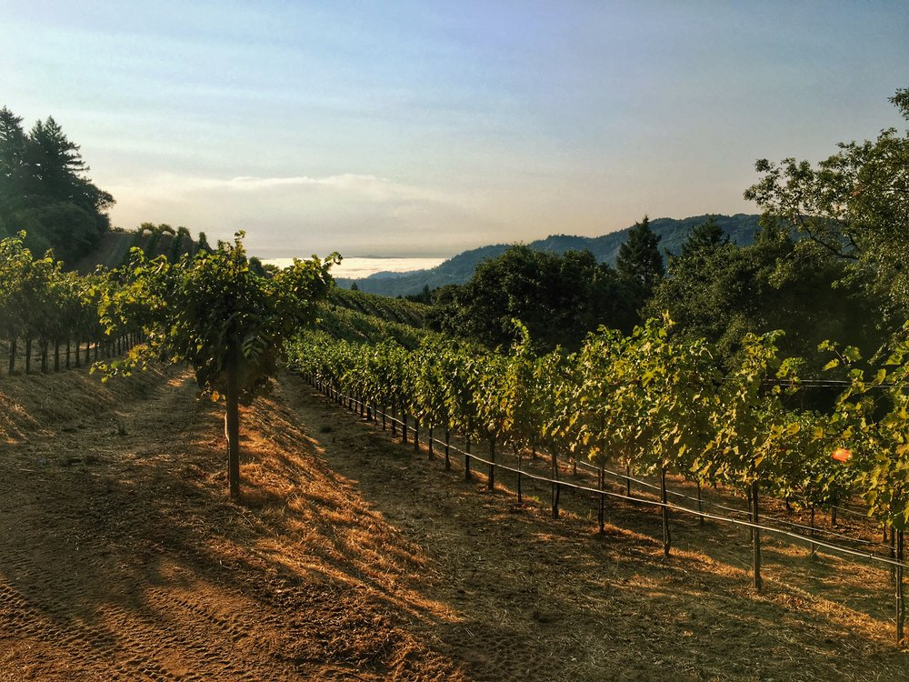Early morning sunrise at Cain Vineyards on Spring Mountain in Napa.