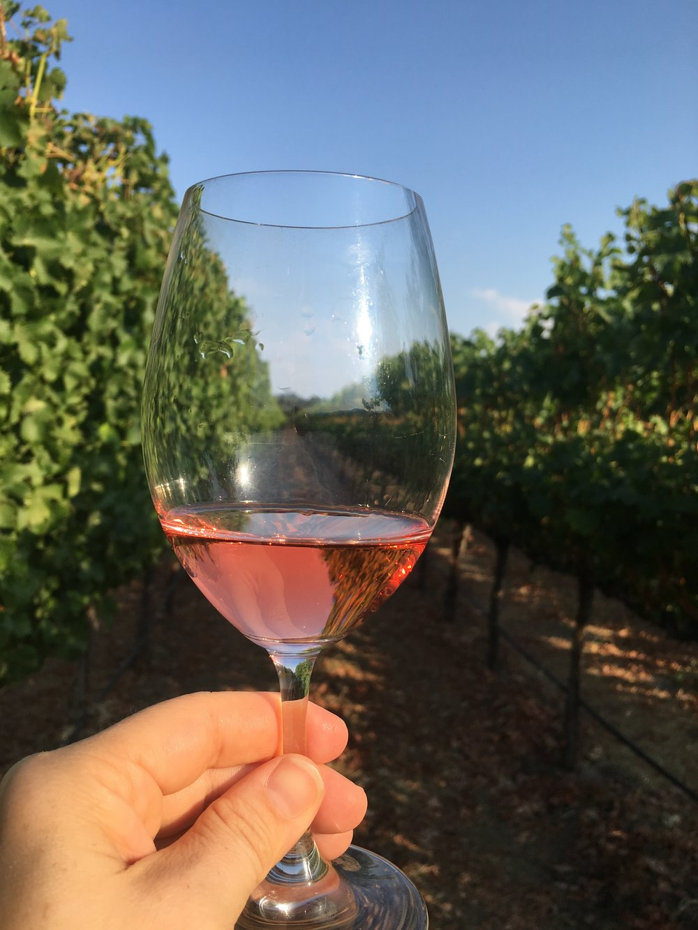 Gamble Family Vineyards and a glass of rose.