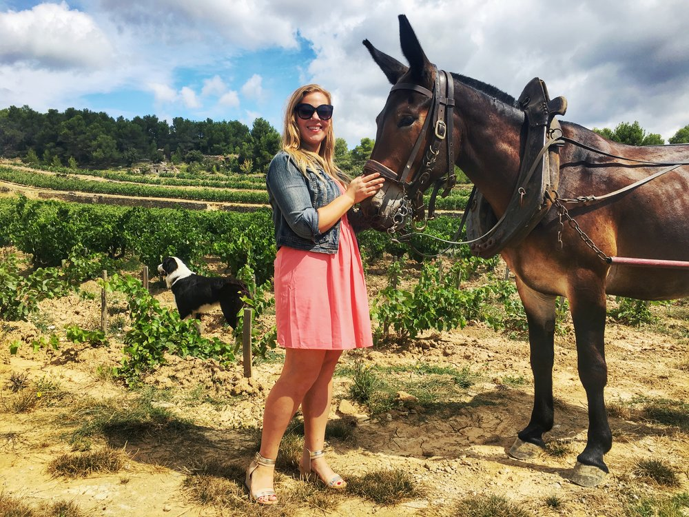 The beautiful biodynamic Clos d'Ora vineyards of Gerard Bertrand in France's Languedoc region are still farmed by mules.