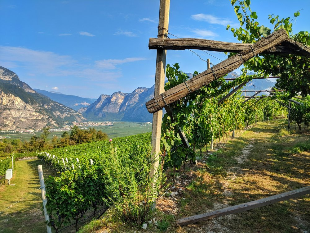 The beautiful vineyards used for Rotari Wines are sustainably farmed.