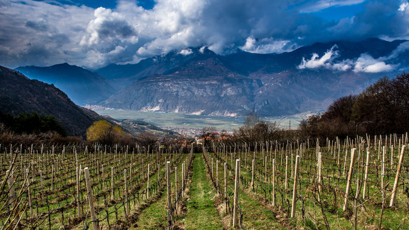 The Lagaria vineyards in Italy's Delle Venezie region represent the best place for Pinot Grigio: the foot of the Dolomite mountains.