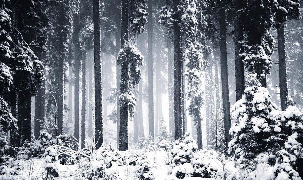 Dark-winter-forest-pokljuka 1120.jpg