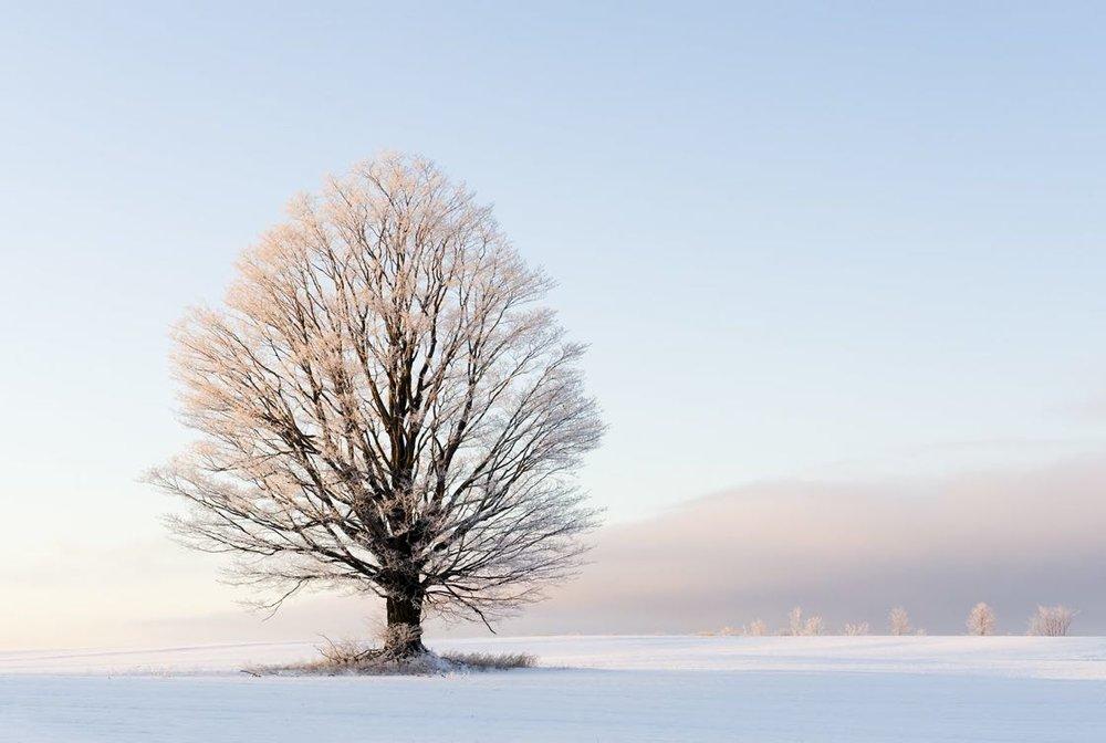 Winter Tree5 Small 1120.jpg