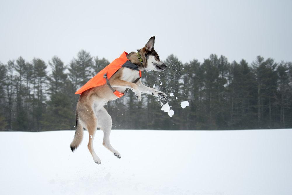 Jump Maisie! Jump!
