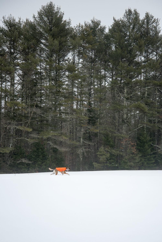 2018 Maine-30.jpg