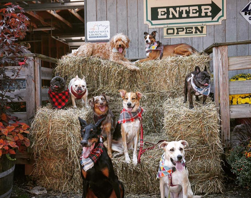 Barktoberfest Apple Orchard.jpg