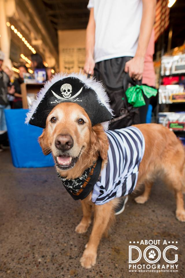 Pirate Golden Retriever.jpg