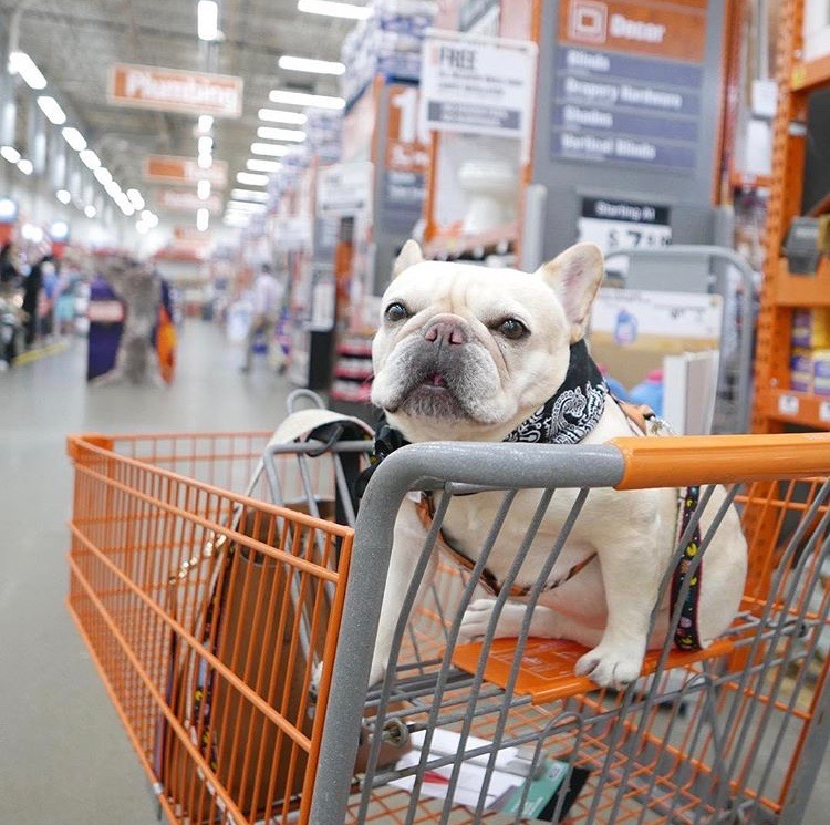 home depot dog friendly