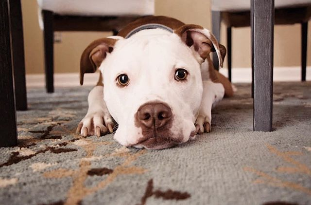 Dogs share many of the same emotions as people do. Dogs can get very nervous and scared in crowded places around strangers.  When dogs get scared, they may impulsively bite. Be mindful where you take your pup, it's not their fault, it's yours. #letyourvoicebeheard