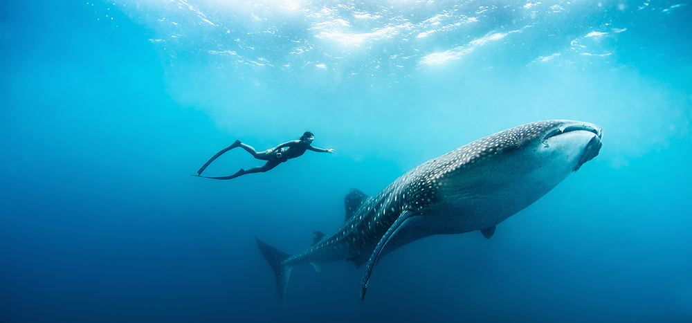 021-Soneva_Fushi_Free_diving_with_whale_shark_by_Peter_Marshall.png