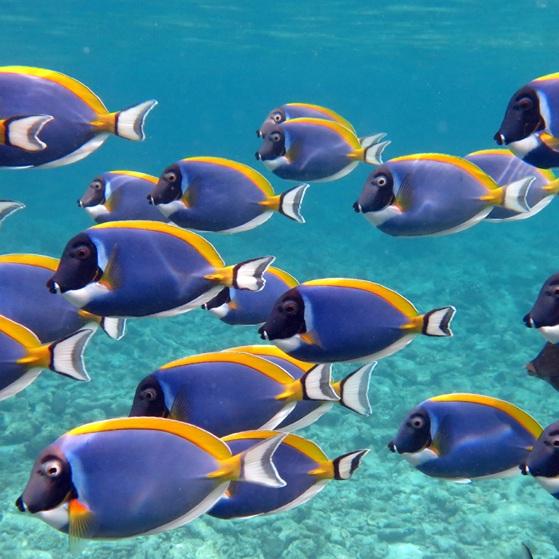 Four-Seasons_Kuda-Huraa_Maldivian-Fish.jpg