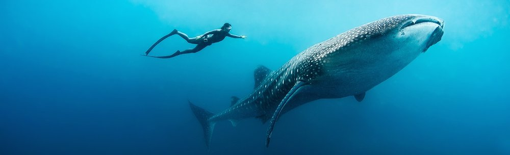 021-Soneva_Fushi_Free_diving_with_whale_shark_by_Peter_Marshall.jpg