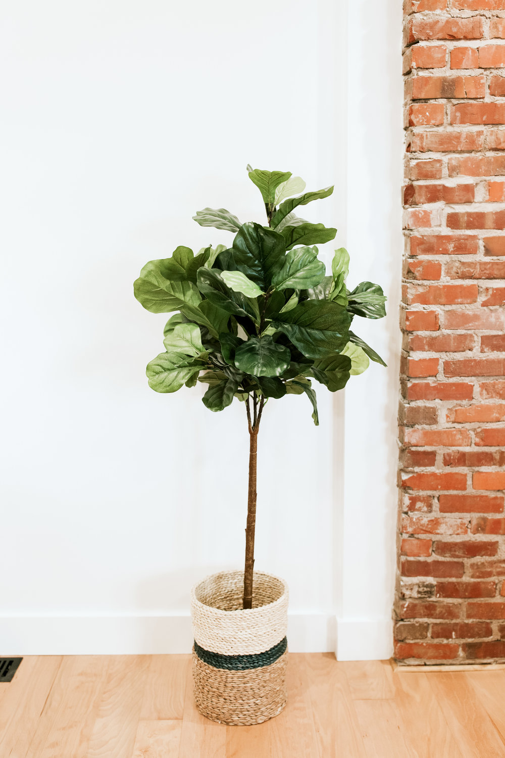 Fiddle Leaf Fig from Hobby Lobby