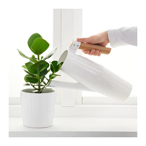 bittergurka-watering-can styled jpg.jpg