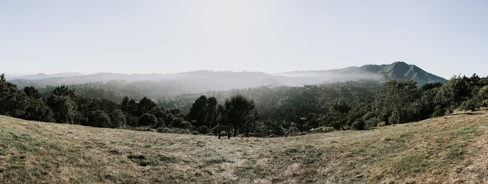 Our trip to San Francisco - hiking in the Mill Valley mountains