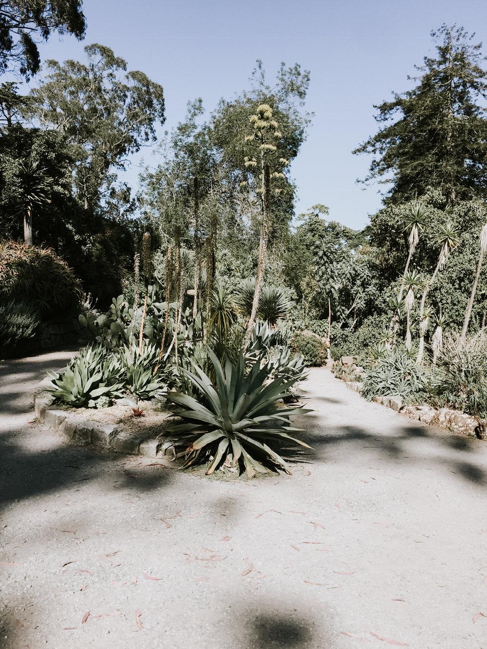 Walking through the Botanical Gardens