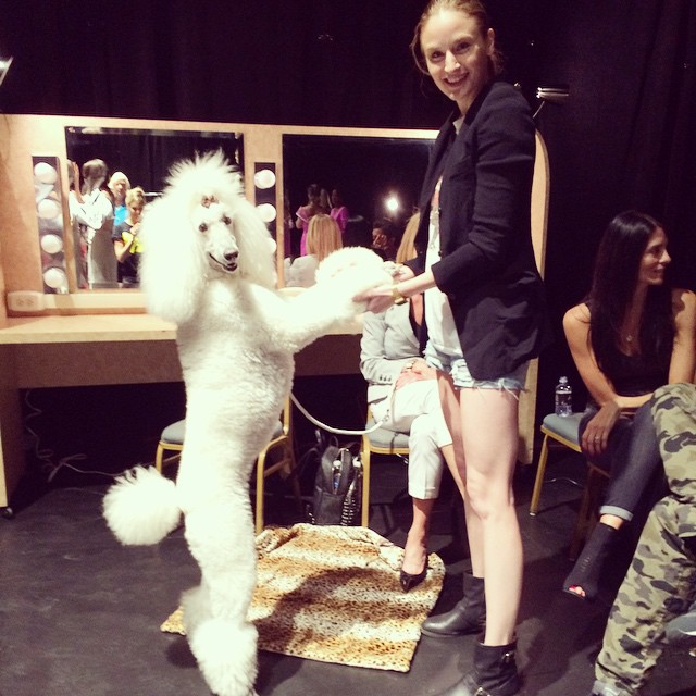 Two #show dogs working out their routine! #mustlovedogs My hair will never naturally have that height. @lamodelsrunway #divathedog was anything but…#runway #modeling #work