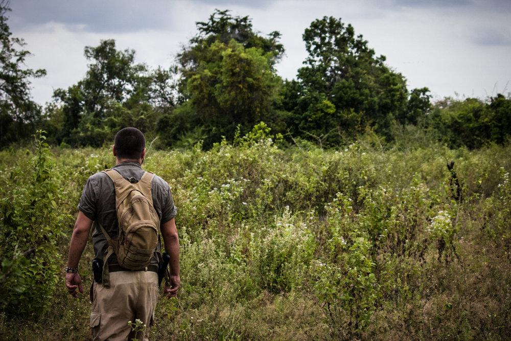 yala-leopard-trails-guide.jpg