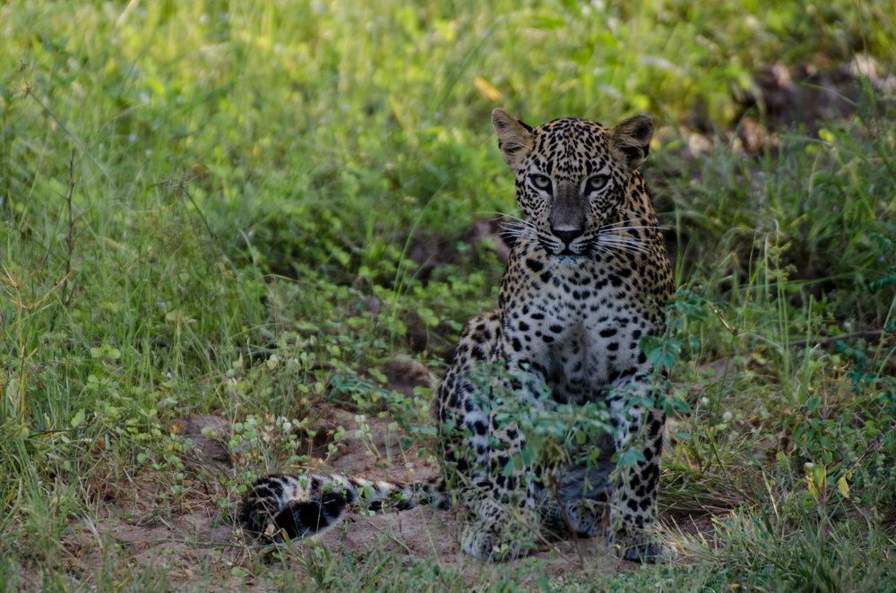 leopard-trails.jpg