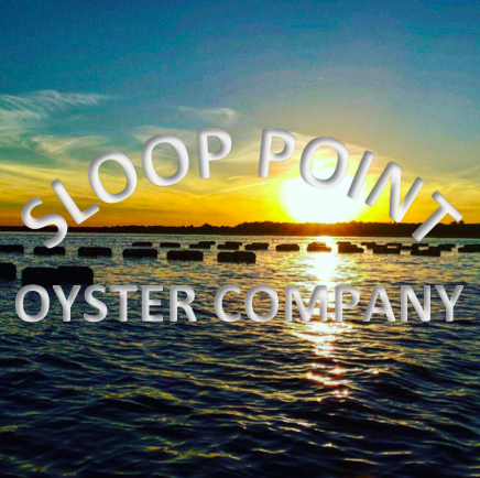 Sloop Point Oyster Co.   Sloop Point - Mantoloking - Barnegat Bay - NJ