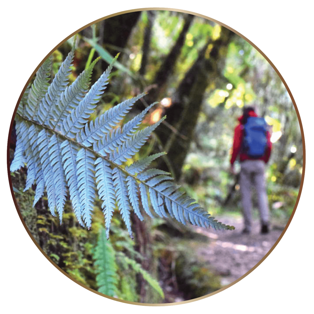 TIC Walking & Hiking Tairua (B).png