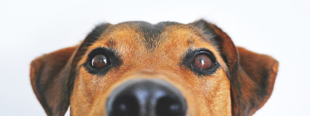 The household pet has been a victim of the housing crisis as many families have been forced to give up dogs. The new proposal is fair and reasonable as the problems arise from the tenants rather than the dog.