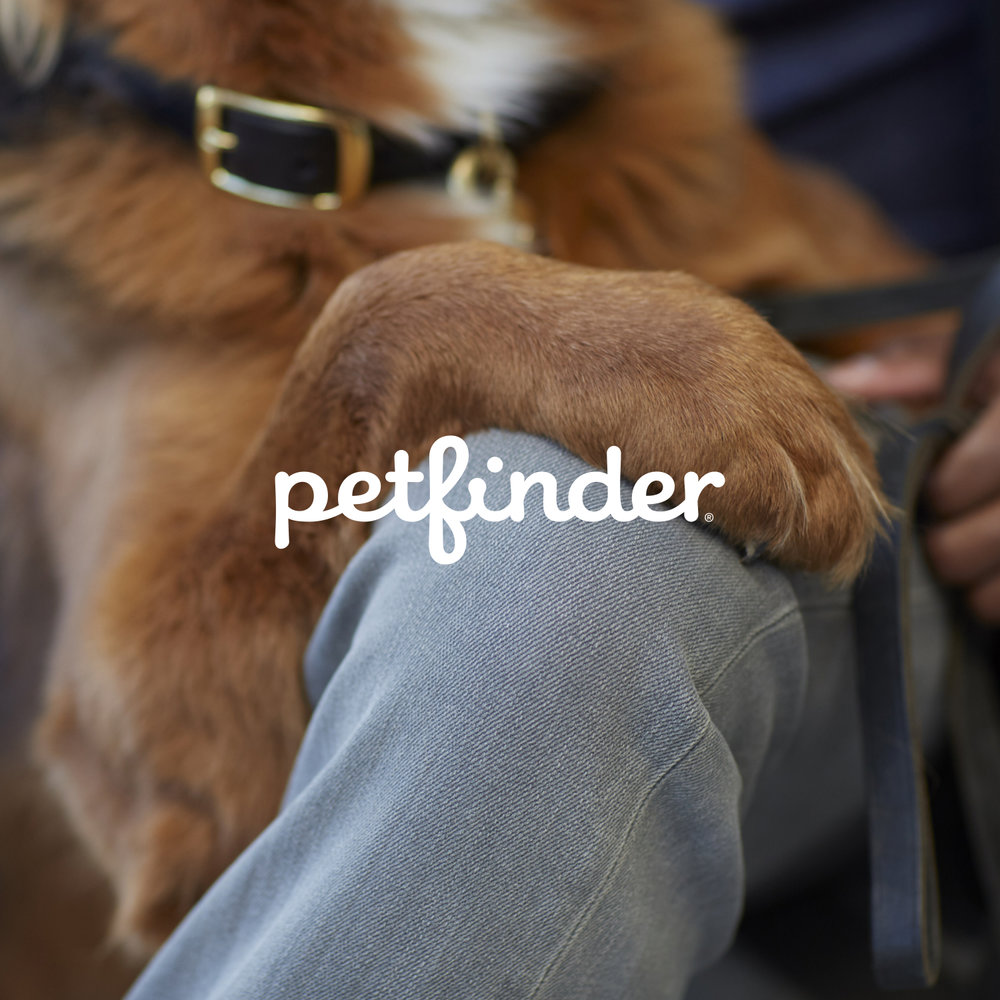 Petfinder Brand Book - 09.13.2016_COPY.jpg