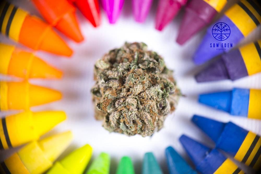 Just as a rainbow has many colors, full-spectrum cannabis oil contains a wide variety of cannabinoids including THC, CBD, CBG, CBC, and so forth.