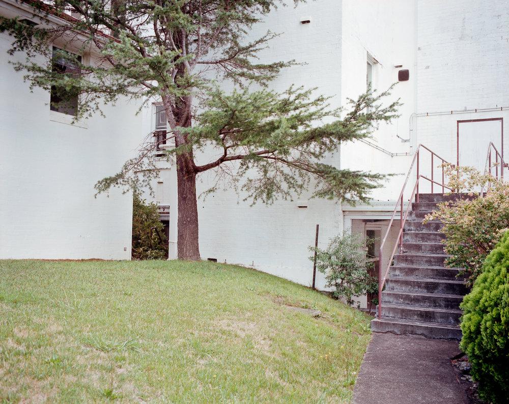 Tre & steps.jpg
