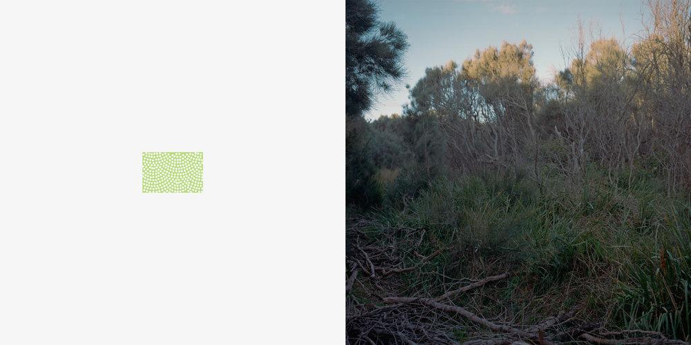 Forest or scrub, dense_colour_tone.jpg